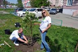 Аллея Мечты появилась в Челябинске
